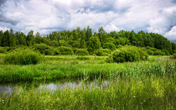 The river flows through the meadows in Belarus Royalty Free Stock Photo