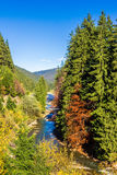 River flows near the mountain forest in autumn Stock Images