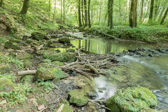 A river flows through the pristine beauty of a green european wood forest Royalty Free Stock Photos
