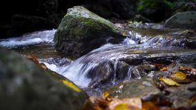 A river flows through the pristine beauty of a green european wood forest stock footage