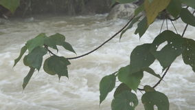 The river flows through the rainforest in the jungle.Tropical river, jungle. stock footage