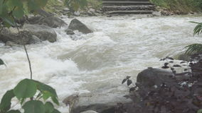 The river flows through the rainforest in the jungle.Tropical river, jungle. stock video