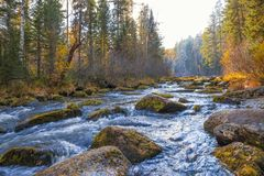 Autumn landscape on a forest river. Stock Images