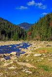 River flows by rocky shore near the autumn mountain forest Stock Images