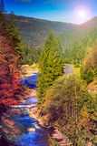 River flows by rocky shore near the autumn mountain forest. Autumn landscape. rocky shore of the river that flows near the pine forest at the foot of the royalty free stock image