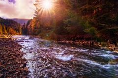 River flows by rocky shore near the autumn mountain forest Royalty Free Stock Photos