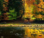 River flows by rocky shore near the autumn mountain forest Royalty Free Stock Photography
