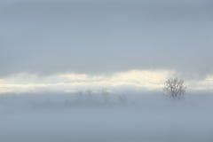 River Fog Stock Photos