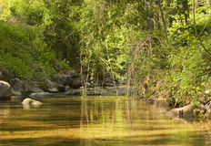 River and foliage stock images