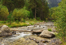River and foliage royalty free stock photos