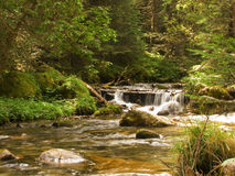 River and foliage Stock Photography