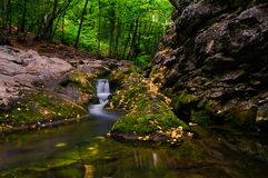 River in forest. Scenic view of river and waterfall in forest, summer scene Stock Images