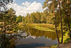 River in forest Royalty Free Stock Image