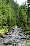River in the forest. River in the mountain forest Stock Images