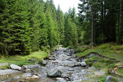 River in the forest. River in the mountain forest royalty free stock photos