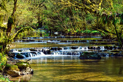 River in the forest. A river with a little waterfall n a forest Royalty Free Stock Photos