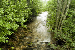 A river in the forest. A small mysterious river in the forest Royalty Free Stock Images
