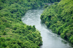 The river in forest. Arial view of river in forest royalty free stock photos