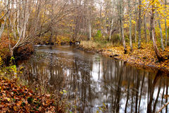 River in forest. Forest river in autumn evening Stock Photos