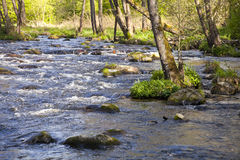 The river in the forest Royalty Free Stock Image