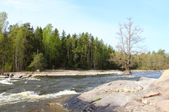 River in forest. In Langinkoski Finland Royalty Free Stock Images