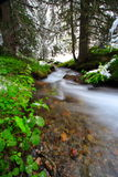 River in the forest. Snow, river and trees in france during the spring season. Long exposure Stock Images