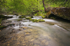 River in forest. With transparencies that show the rocks Stock Images
