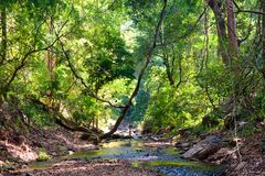 River through the forest Royalty Free Stock Photos