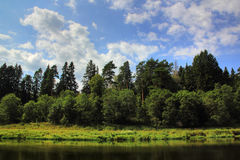 River in the forest. Stock Photo
