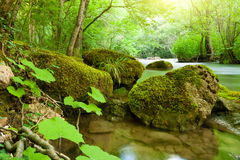 River in the forest Royalty Free Stock Photo