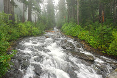 River in a Forest. A running river in a forest on Mt Rainier Seattle Washington USA Stock Photo