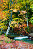 River in forest. An image of river in autumn forest Royalty Free Stock Photos