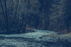 River through forest Royalty Free Stock Photos
