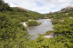 River in the forest at the Los Glaciares National Park, Argentina. River in the forest along the trail to Cerro Fitz Roy at the Los Glaciares National Park Royalty Free Stock Photo