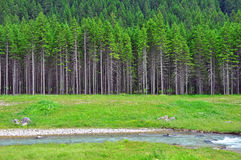 River and forest Royalty Free Stock Photos