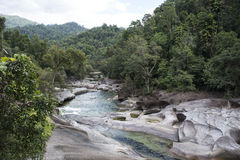 River with forest, Australia Royalty Free Stock Photo