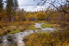 River and Forest in autumn Stock Images
