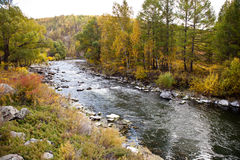 River and Forest in autumn Royalty Free Stock Photos
