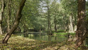River in the forest. Autumn daytime. Smooth dolly shot stock video footage