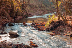 River in forest and autumn leaves Stock Photography