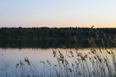 River and forest. Beautiful calm nature in summer Before dawn, plants, river and forest stock image