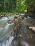 River in the forest. Beautiful natural landscape in the summer time stock images