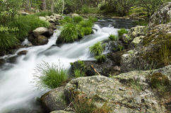 River in the forest royalty free stock images
