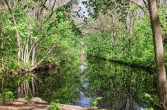River in the forest. Early spring season Stock Photo