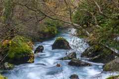 River in forest. Fast river in Fontaine-de-Vaucluse, France Royalty Free Stock Image