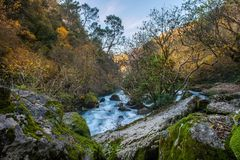 River in forest. Fast river in a mountains Stock Photos