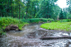 River in forest Stock Photography