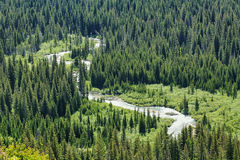 River and forest in Glacier national park Royalty Free Stock Images