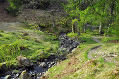 River on forest glade in English countryside. English countryside landscape taken in Lake District, North Yorkshire, England. Small river stream between rocks Stock Photo