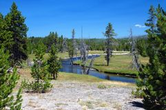 River in forest with green and dead trees. In Yellowstone National Park, USA Royalty Free Stock Images
